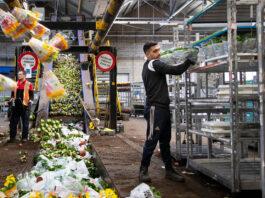 empleado de almacen flower store clerk wholesale florist staff personal de floristeria al mayor