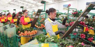 empleadas para almacén de flores personal femenino para floristeria employee in flowers store florist staff store worker