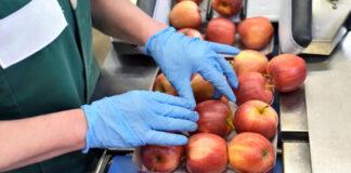 empacadores de fruta operario para almacen tareas de empcado fruit packers warehouse operator packing tasks