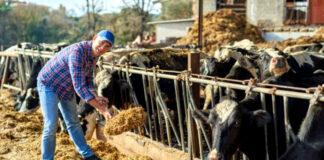 Trabajadores Para Rancho personal para rancho cucamonga