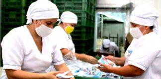 manipuladoras de alimentos operarias de empacado de comida vegana food handlers vegan food packaging operators
