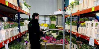 trabajadores para almacen de flores flower warehouse staff warehouse workers