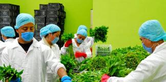 trabajadores para almacen warehouse de flores y vegetales operarios de produccion production operators flower and vegetable warehouse workers