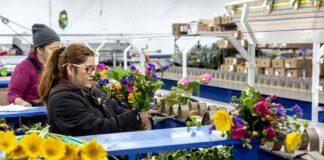 warehouse de flores trabajadores para almacen de flores operarios de almacen temporada del dia de las madres