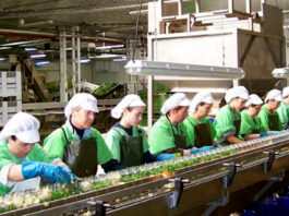 operarios para produccion operators for online production operarios de produccion en linea para industria de alimentos online production operators for the food industry