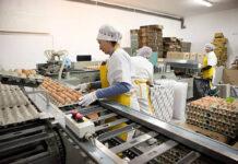 empacadores de huevoss egg packets
