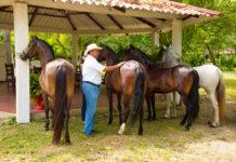personal-para-granjas-de-caballos