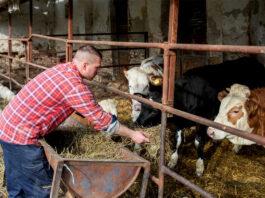 empleado para finca ganadera vacuna employee for cattle ranch