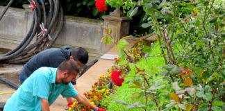 jardinero gardener