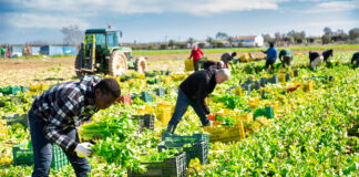 peon de campo empleado para finca farm staff
